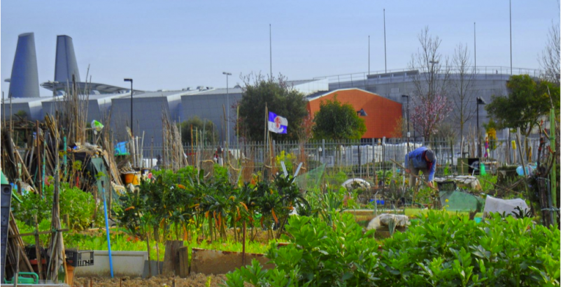 Urban Gardening In Florence A Social Sustainability Experience