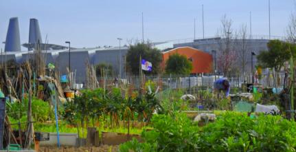 urban-gardening-florence